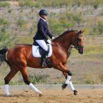 Equestrian Rubber Infill | GroundSmart Rubber Mulch